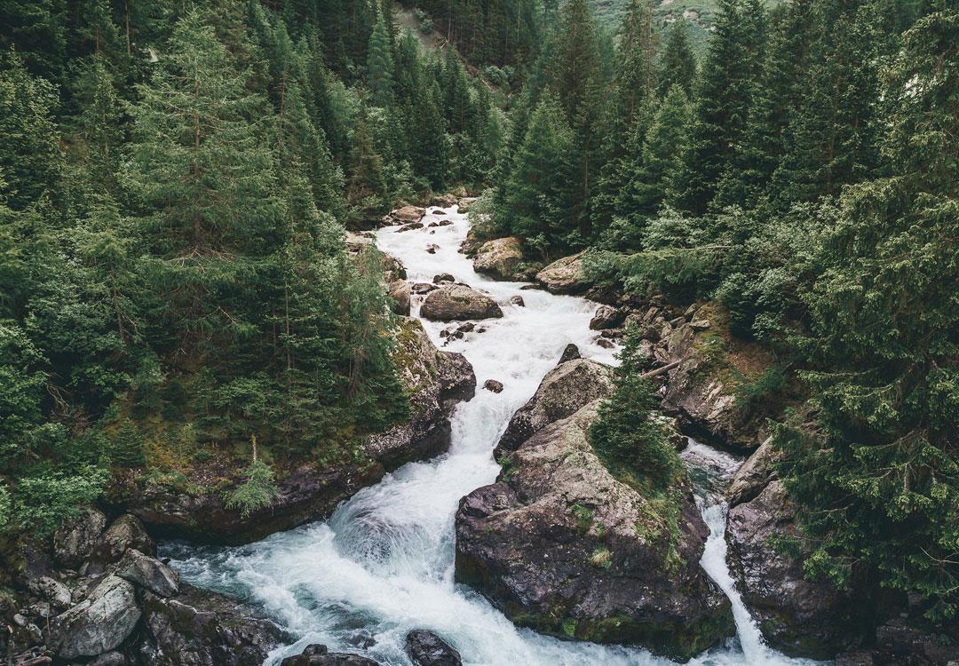 Rwący górski potok z dużymi głazami w korycie płynący przez las