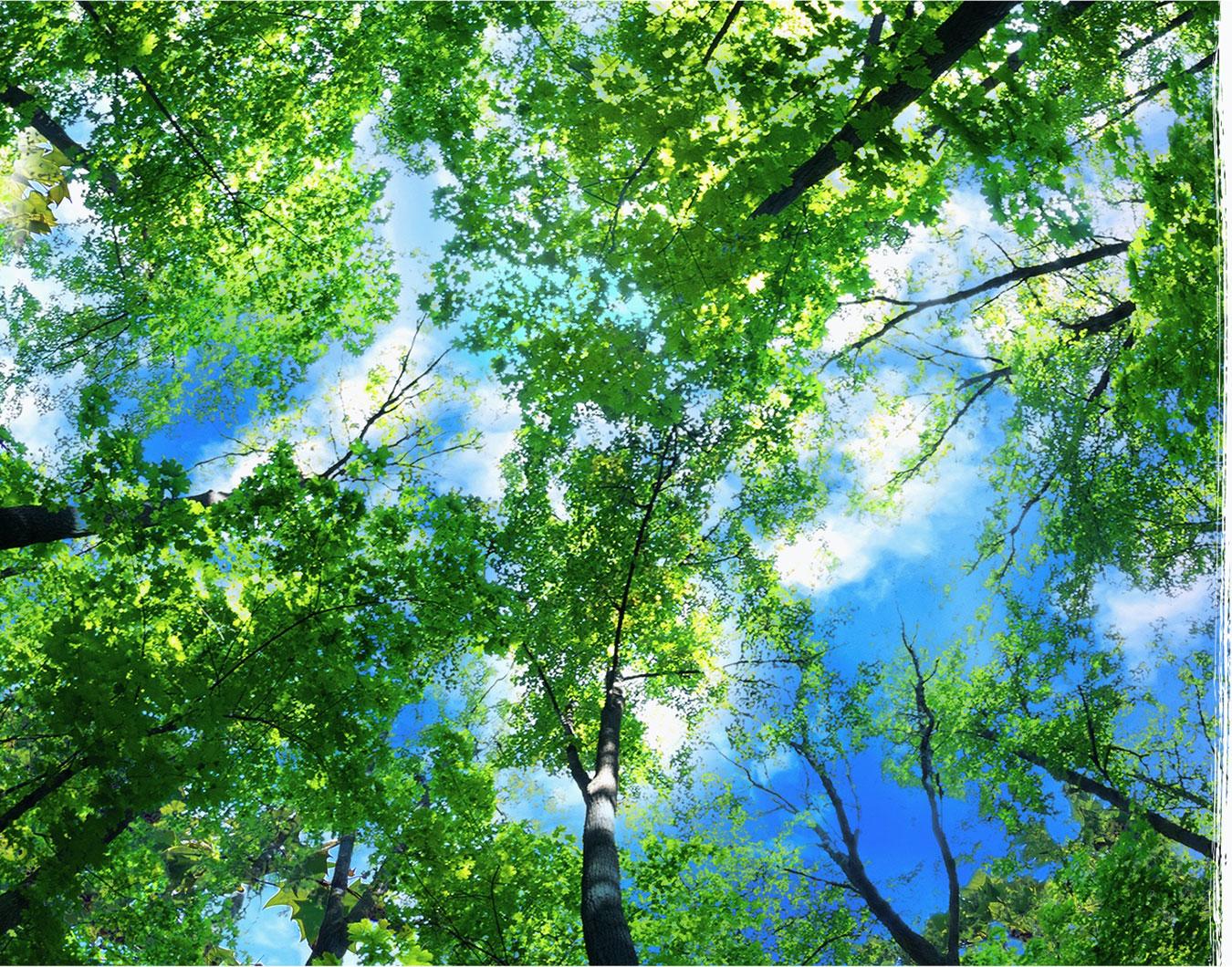 Korony drzew na tle nieba w słoneczny dzień