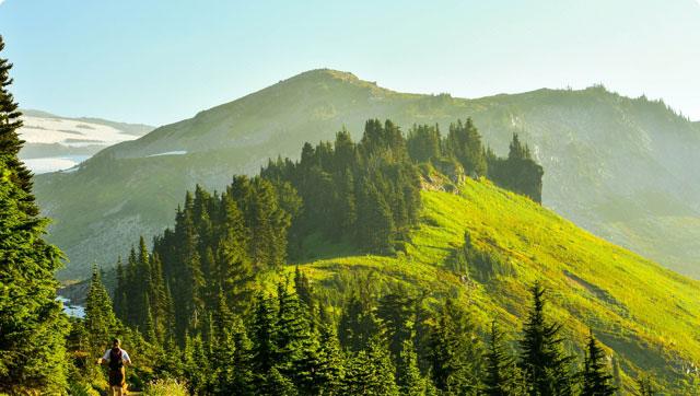 Porośnięte lasami rozłożyste szczyty gór na Żywiecczyźnie